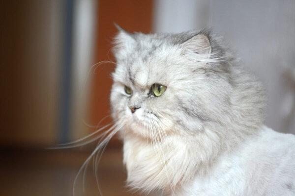 Ciri kucing mau mati
