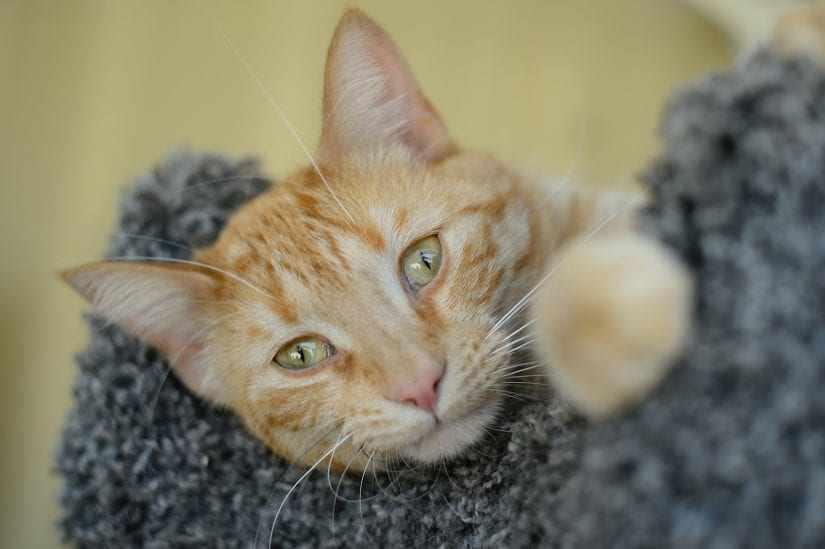 Penyebab dan cara mengatasi kucing mencret