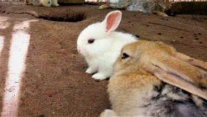 Jenis kelinci lucu
