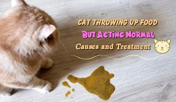 Penyebab dan cara mengobati kucing muntah