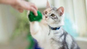 Cara melatih kucing