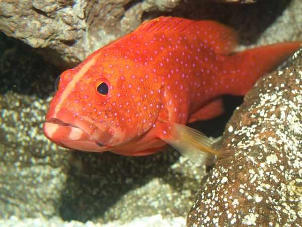 Daftar Harga Ikan Kerapu Semua Jenis Terbaru Dan Lengkap
