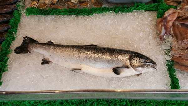Harga ikan salmon per gram, per kg, kalengan