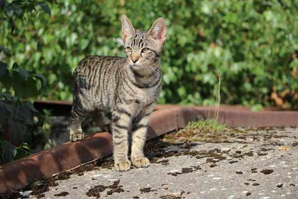Harga kucing hutan semua jenis terbaru