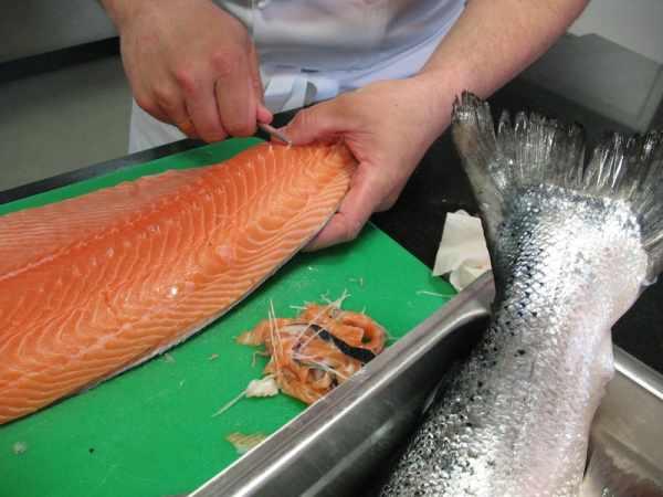 Ikan salmon dan harganya
