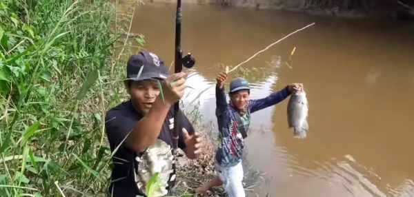 27 Racikan Umpan Ikan Nila Paling Jitu Yang 100 Ampuh