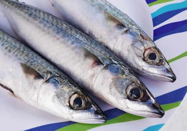 Manfaat ikan tenggiri