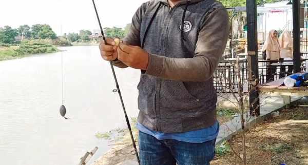 Umpan ikan patin alami