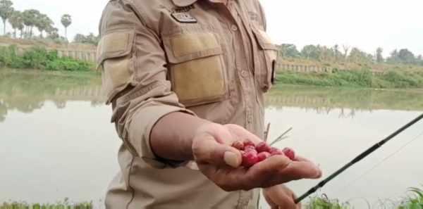 25 Racikan Umpan Ikan Patin Alami Paling Jitu Terbaru