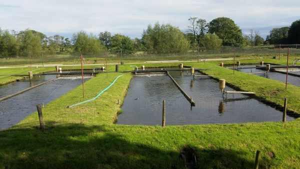 Cara budidaya ikan lele di kolam tembok, terpal, tanah