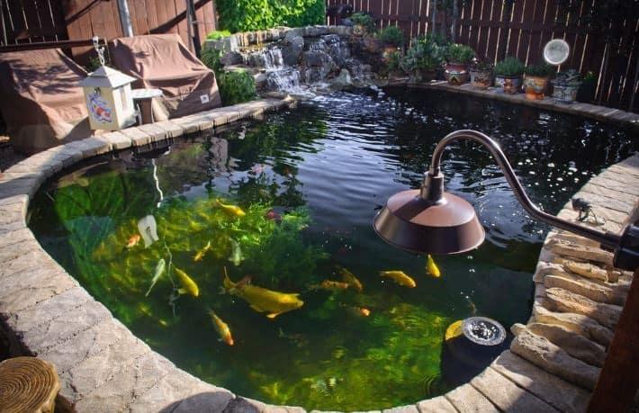 Cara membuat filter kolam ikan