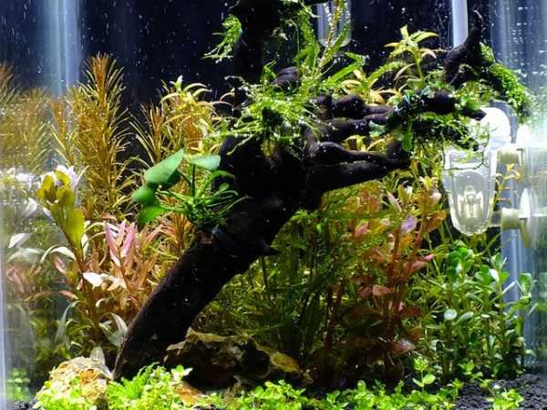 Cara membuat aquascape sederhana