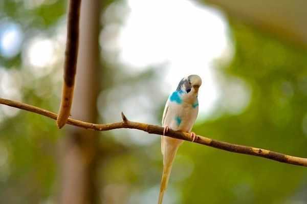 Daftar harga burung kenari lokal