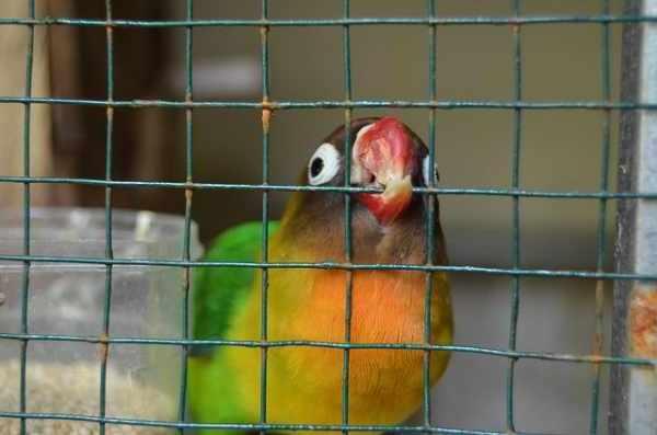 Jenis burung kicau di Indonesia