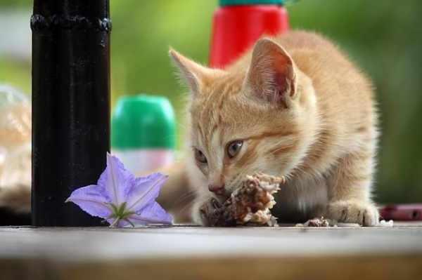 10 Makanan Dan Minuman Kucing Kampung Agar Sehat Dan Bulu Lebat