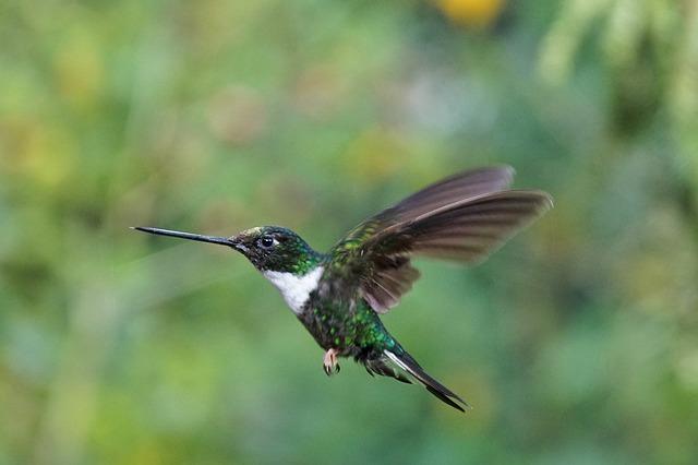 Harga burung kolibri