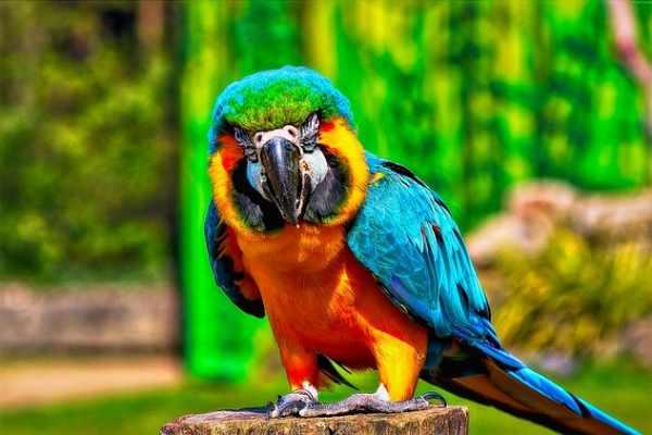 Daftar Harga Burung Nuri Terbaru Dan Terlengkap