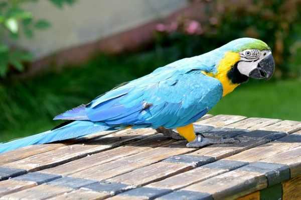 Jenis dan harga burung nuri terbaru