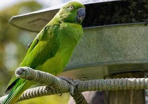 Daftar Harga Burung Betet Terbaru Dan Terlengkap Update