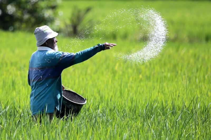 Perawatan lahan padi
