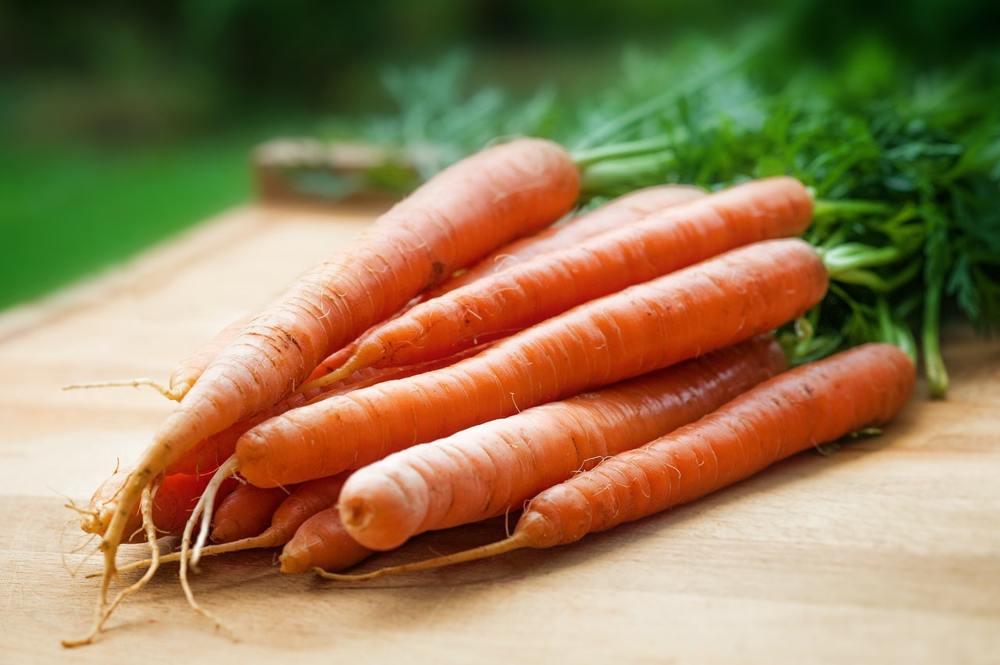 cara menanam wortel di pot