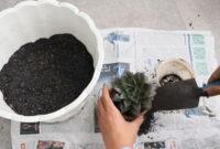 cara merawat kaktus di tempat yang dingin
